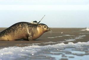 Week in Wildlife: Injured seals get survival boost