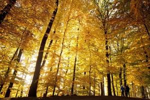 Week in Wildlife: Autumn weather in Switzerland