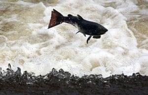 Week in Wildlife: Annual fish migration