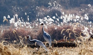 Week in Wildlife: Migratory birds seen near inter-Korean border