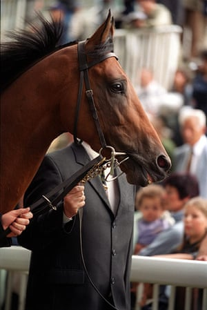 Fergie's 25 years: Alex Ferguson's horse Rock of Gibraltar