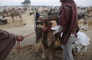 24 hours in pictures: annual livestock fair in Pushkar , Rajasthan