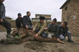 Eid al-Adha: Sunni Muslims prepare to slaughter a camel