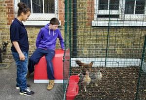 Bridge Academy: Chicken coop