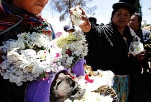 Bolivia Day of the Skulls: flower petals