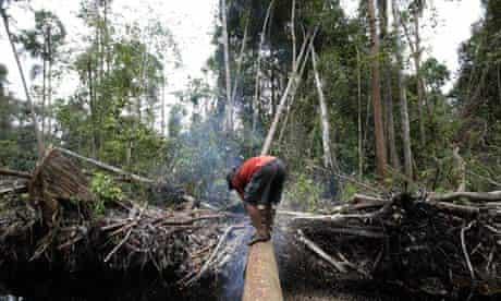 Rainforest deforestation in Indonesia