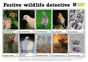 virtual Christmas gift: Wildlife Watch