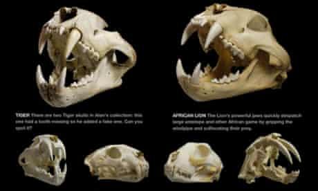 Skulls app for iPad
