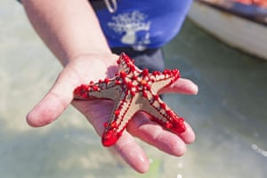 Mozambique dhow trip: Quirimbas starfish