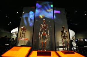 Year in Science: Skeletons of a chimpanzee, left, a modern human, center, and