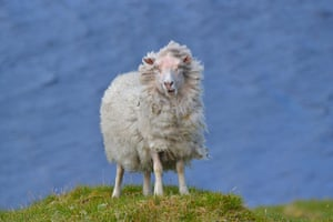 RSPCA Photography Awards: 12-15s Emily Biggs - Conquering a Blustery Peak