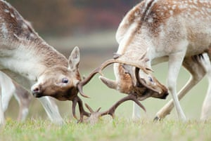 RSPCA Photography Awards: Deer in Richmond Park taken by Sam Rowley
