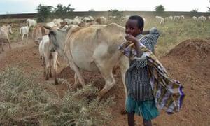 Boy with cattle Ogaden