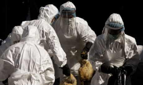 Health workers slaughter chickens at a poultry market in Hong Kong
