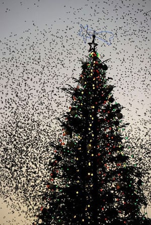 24 hours in pictures: Flocks of starlings
