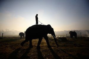 24 hours in pictures: A mahout rides his mount ahead of an elephant race in Chitwan, Nepal