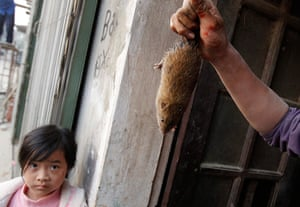 24 hours in pictures: A rat  in Canh Nau village