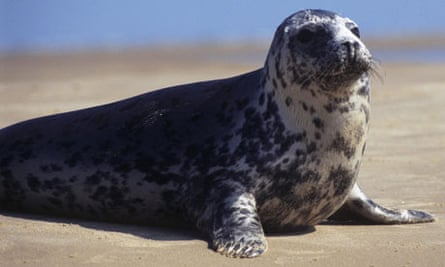 A seal sitting on a beach at Blakeney Point