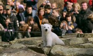 File photo of visitors watching Polar bear cub Knut in Berlin zoo