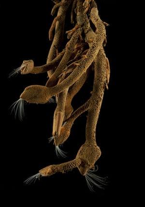 Deep sea creatures: Stalked barnacles
