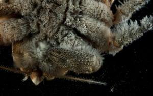 Deep sea creatures: Sea mount