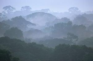 Yasuni National Park: Tropical Rainforest Canopy in Morning Fog