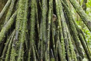 Yasuni National Park: Moss growing on tree trunks