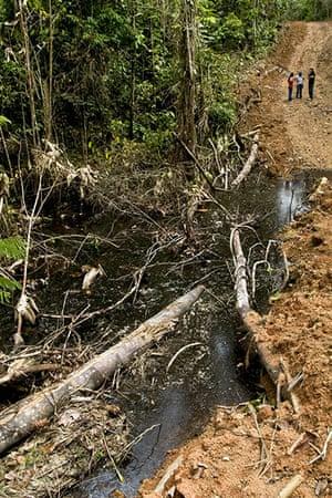 Yasuni National Park: Ecuador Seeks To Preserve Rain Forest Oil Field