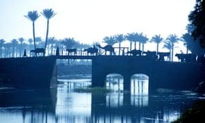 Egypt Nile Delta Canal