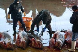 Shark fishing: a worker removes a shark's fin