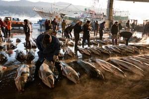 Shark fishing: Swordfish are inspected at Kesennuma before being sold