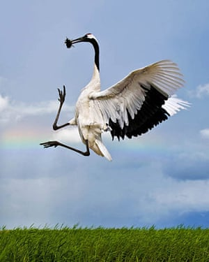 Photo Competition: The Worlds Rarest Birds 2010