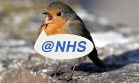 Robin twittering