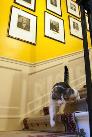 Larry the Downing St cat: Larry, a four-year-old tabby cat, will be tasked with warding off rats