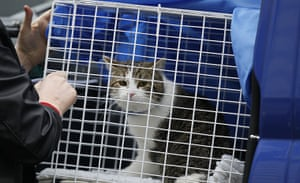Larry the Downing St cat: Larry the cat arrives at his new home