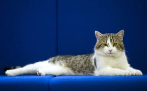 Larry the Downing St cat: 'Larry', the new Downing Street cat, rel