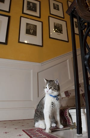 Larry the Downing St cat: Larry on the stairs of 10 Downing Street