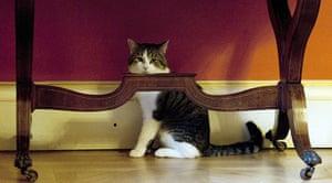 Larry: Larry the cat