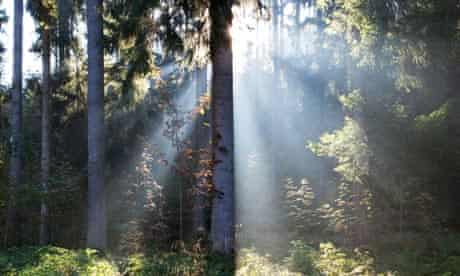 Forest and sunbeams