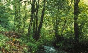 Woods in Bodmin Moor