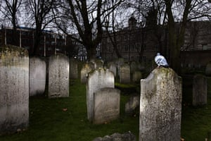 Bunhill fields cemetery: A pigeon perches on a grave in Bunhill Fields cemetery