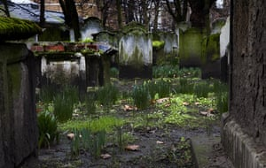 Bunhill fields cemetery: Daffodils grow among graves