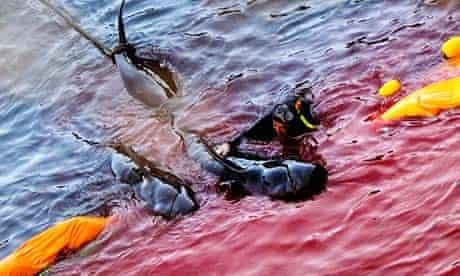 Whaling in Taiji