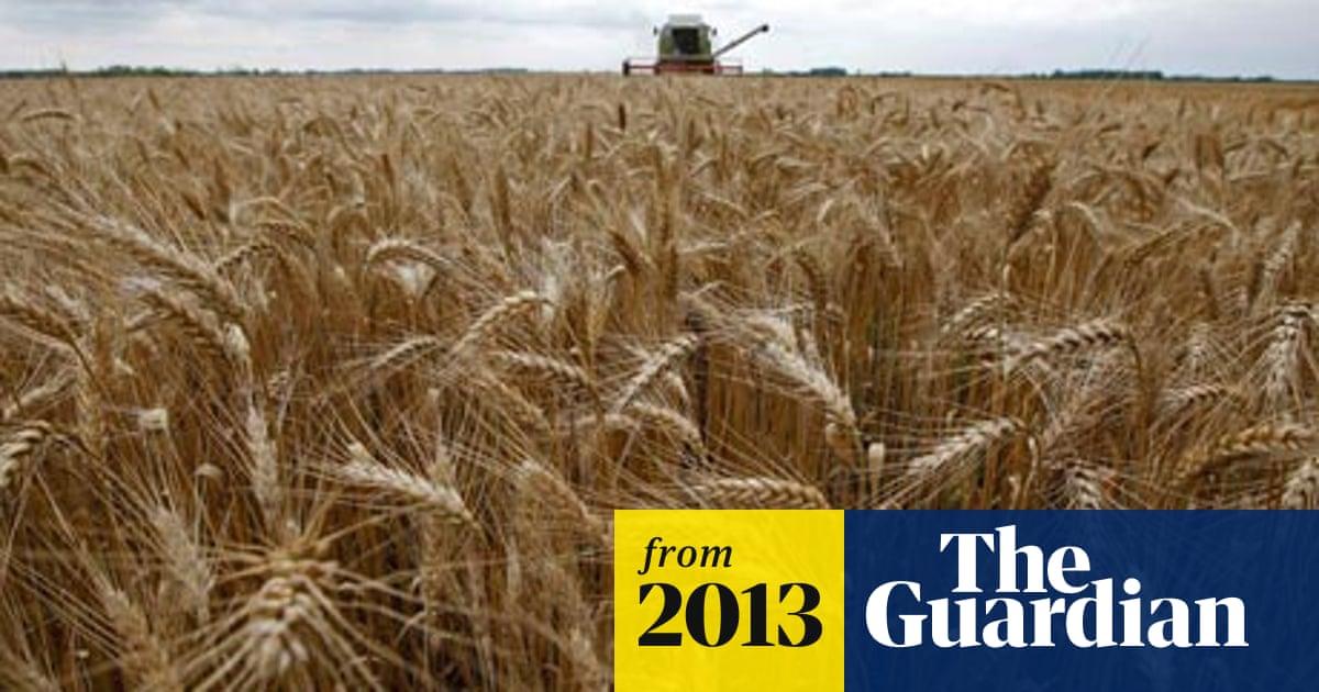 Genetically modified wheat found in Oregon field raises trade