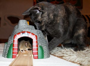 In pictures: play: Cat and mouse
