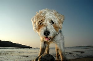 In pictures: play: Dog on beach