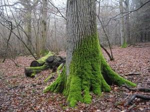 Green shoots: woodland on Flickr