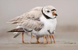 Week in Wildlife: Mother bird has loads of legs