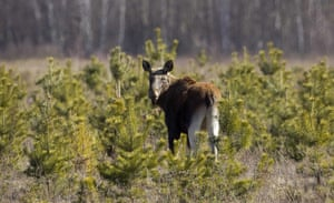 Week in Wildlife: Elk stands in a field in exclusion zone around the Chernobyl
