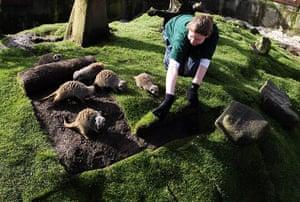 Week in Wildlife: new turf in the meerkat enclosure